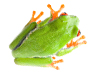 Web Design Staffordshire: Frog